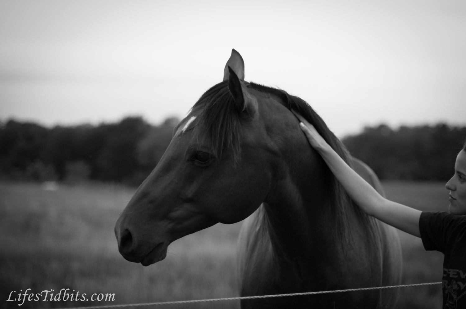 Beautiful Horse Photography Black And White | Wallpapers ...