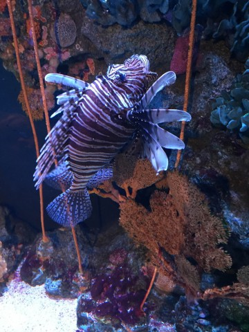 SEA LIFE Bangkok Ocean World | Life's Tidbits