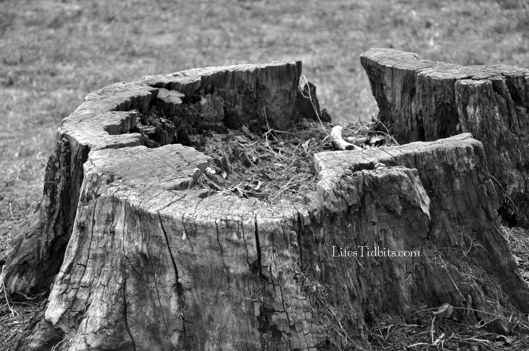 treestump_blackandwhite